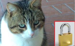 Come attivare HTTPS su Tomcat